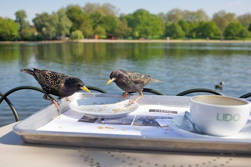 Breakfast@Lido by djidji.perroto, via Flickr