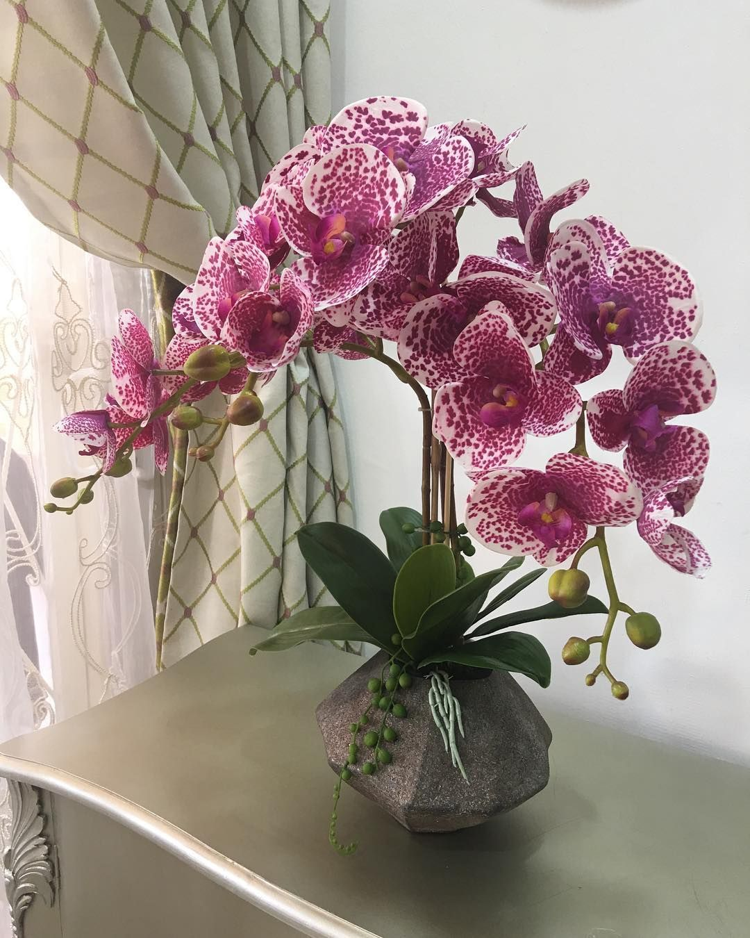 Best 12 orchids burgundy exoticflowers page