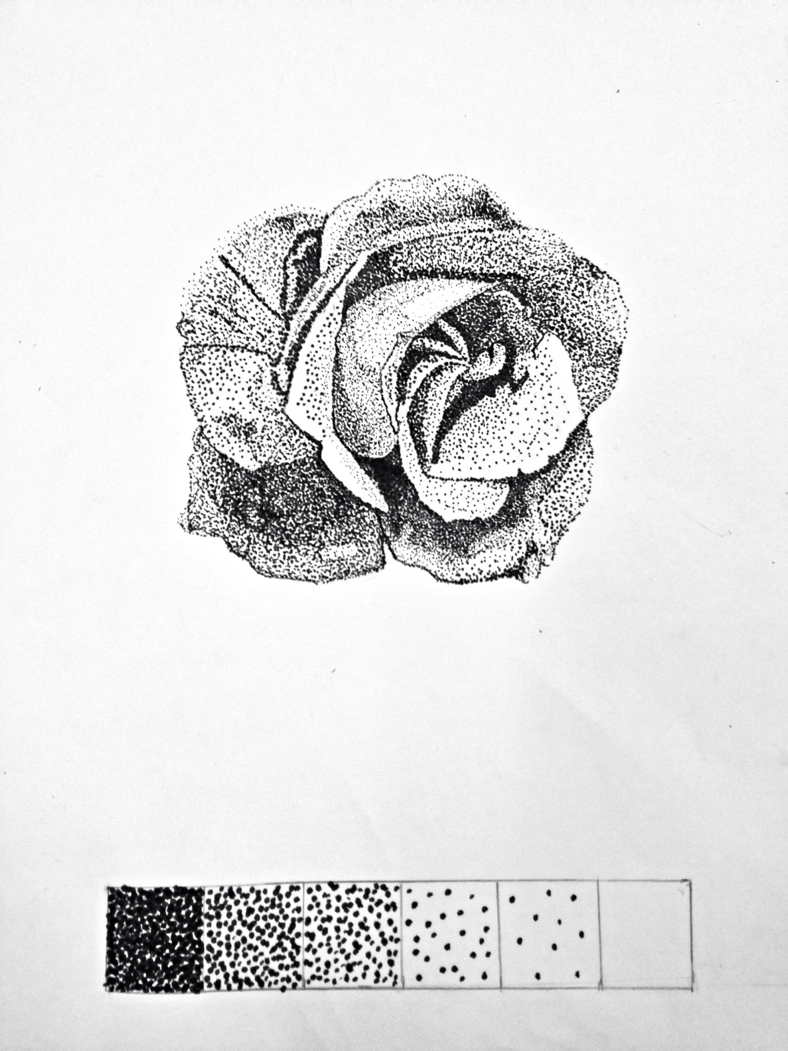 Rose Dot Pointillism Art Project Using A Calligraphy Pen 6 Value Scale