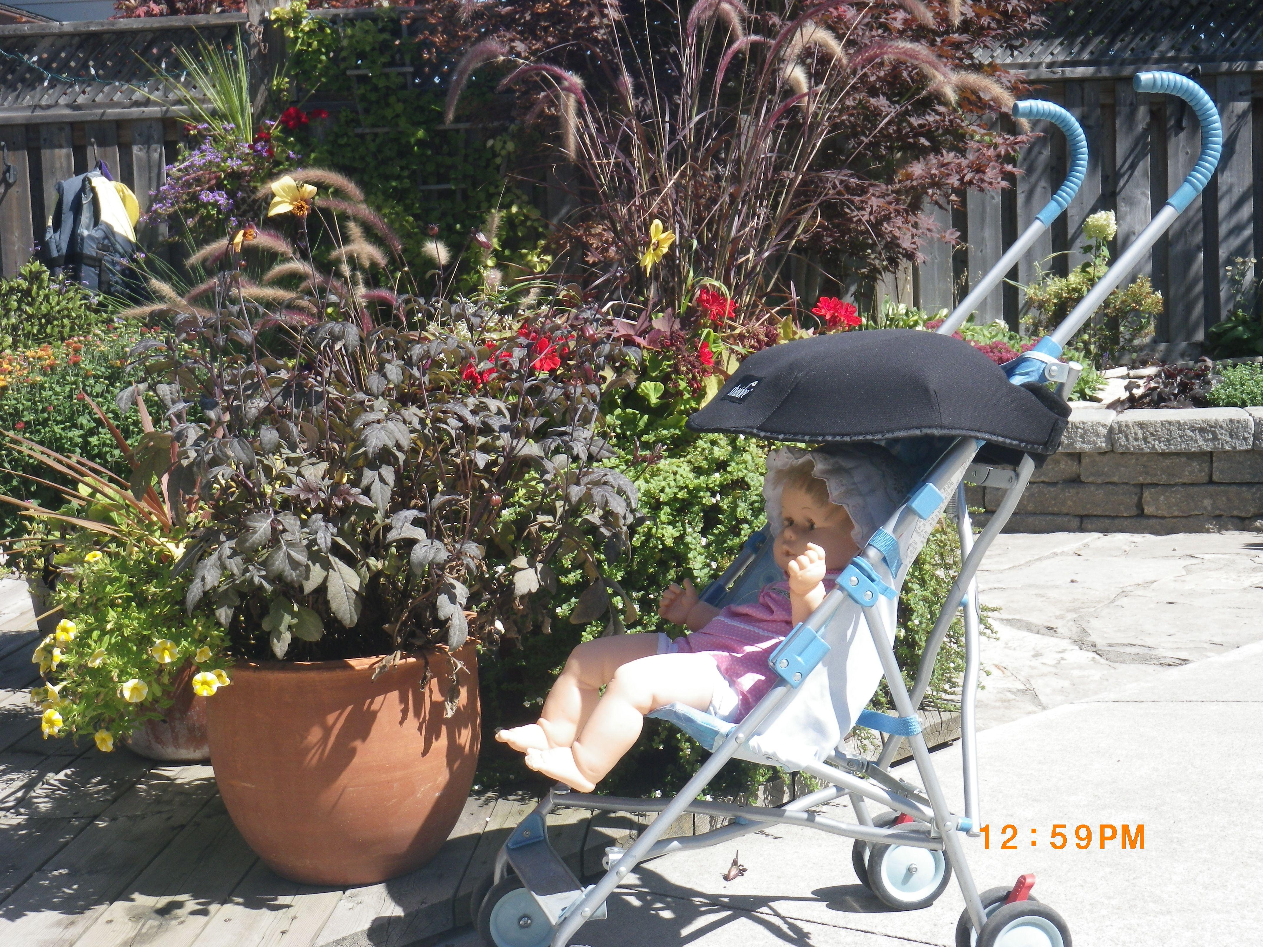 Shaidee on the stroller! Baby strollers, Stroller, Children