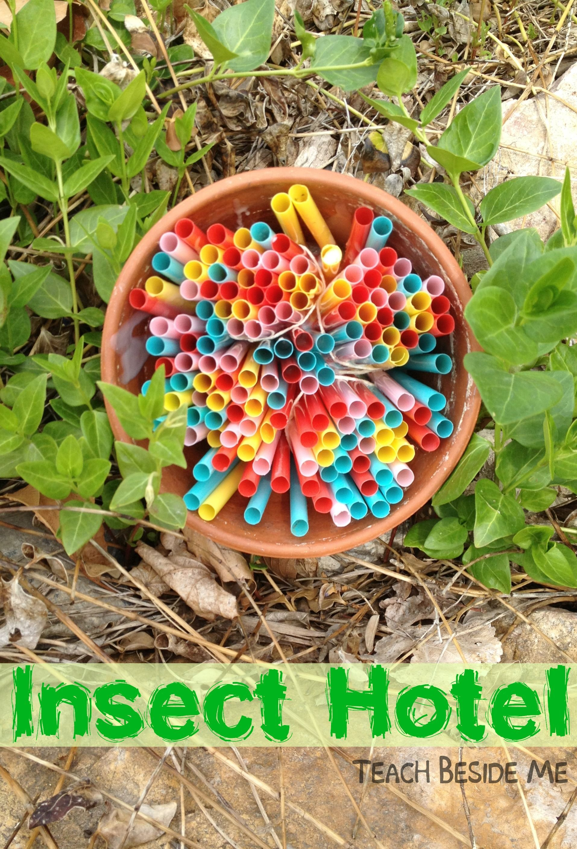 Insect Hotel Nature Science