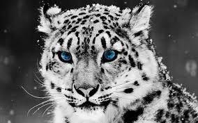 「猫 科 の 動物」の画像検索結果