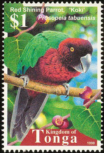 Tonga 1998 - El Papagayo Granate,es endémico de las islas del este de Fiji, y fue introducido hace siglos en Tonga.