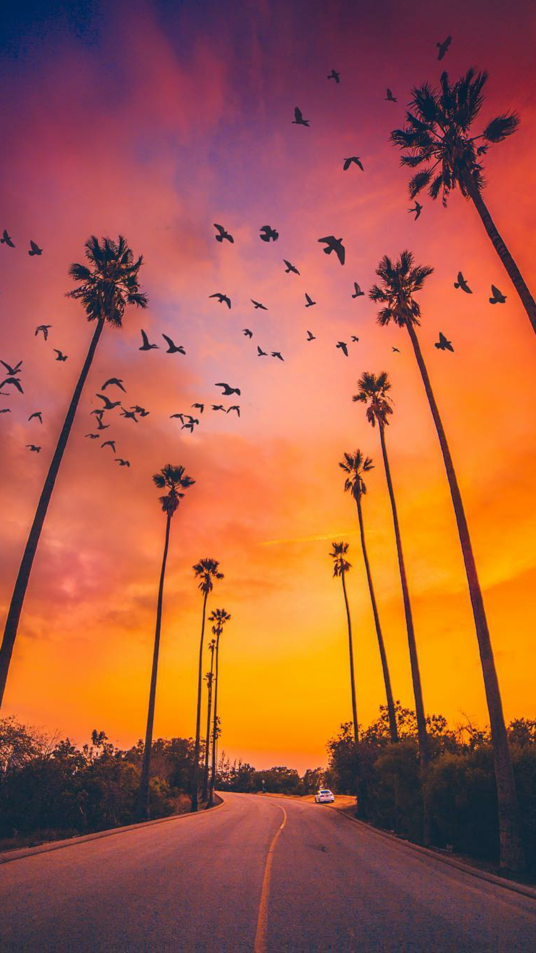 Palm Trees Sunset Nature iPhone Wallpaper Nature