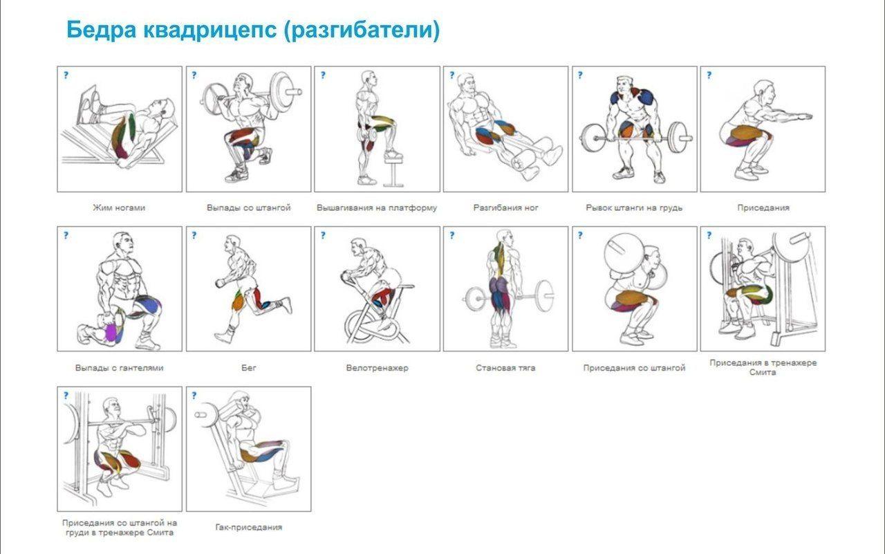 упражнения для разных групп мышц в картинках принципе, интересно, как