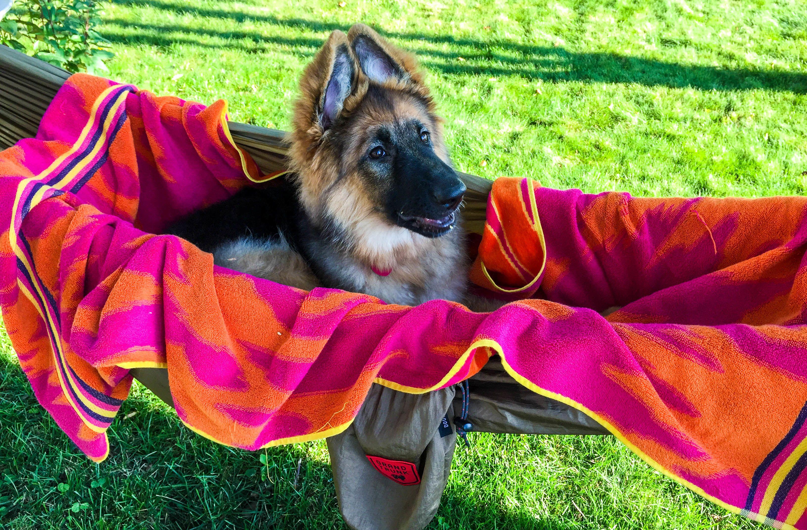 madera ixlib dog rb dogs with blogs camping outdoor photo hammock news hammocks
