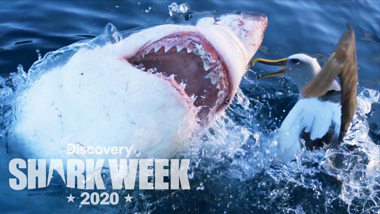 Dog Attack Shark - YouTube