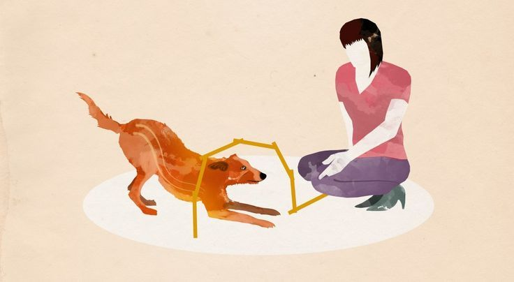 5 Indoor Ubungen Die Die Beziehung Starken Hunde Hundchen Ubung Und Hunde Erziehen