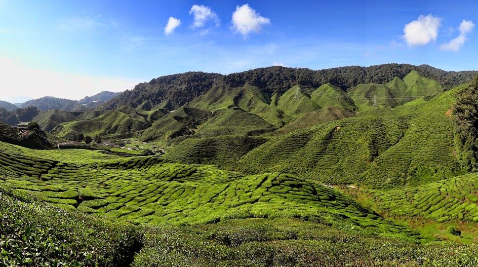 Pin by Cyrus Irani on Tourists Places Cameron highlands