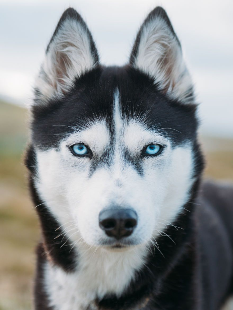 I Quit My Job To Go On Adventures With My Husky Dogs Siberian