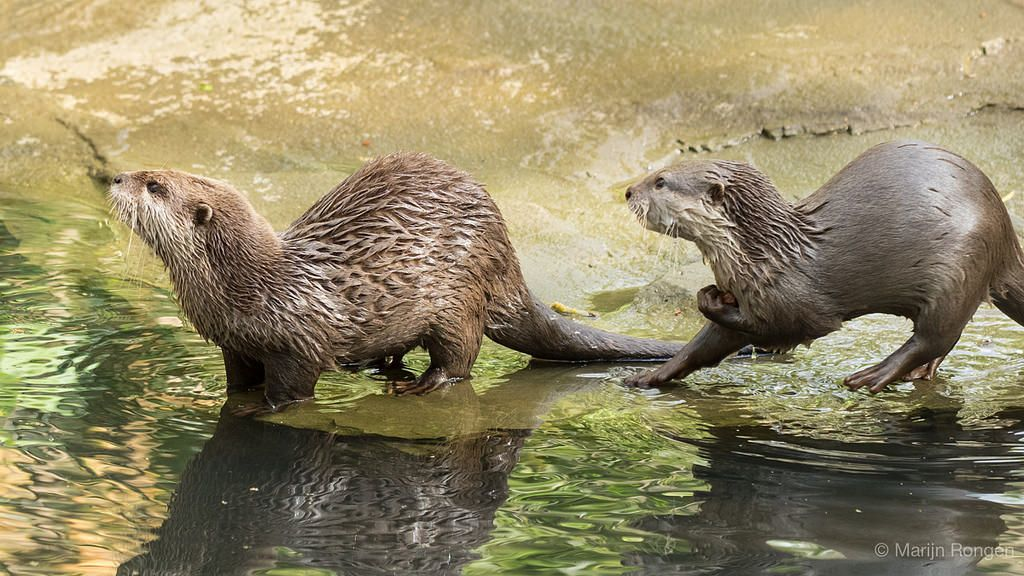 Pin by Martina Beck on Otters | Otters, Baby animals, Animals