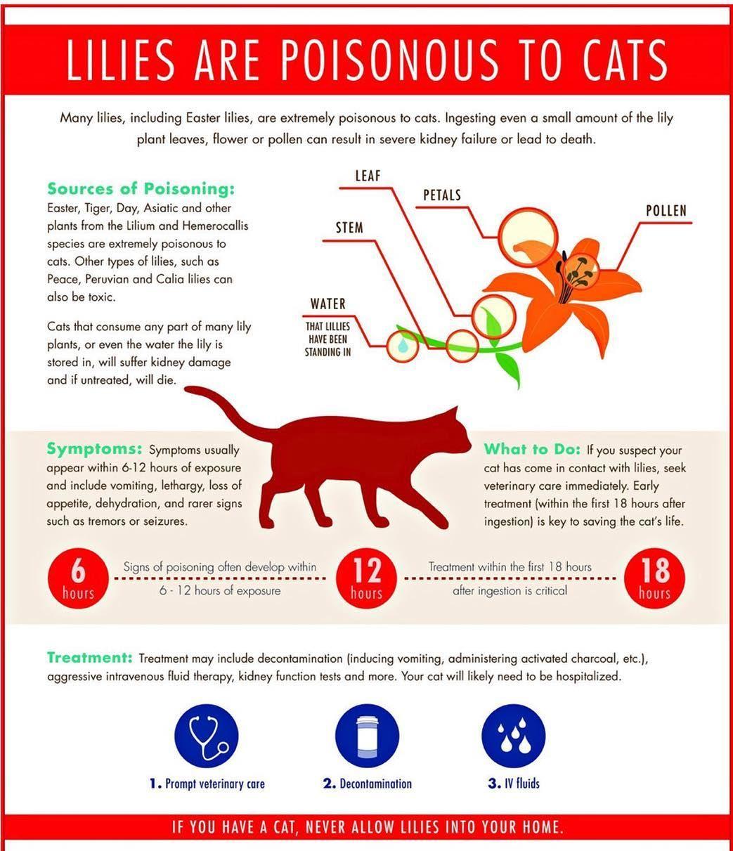 """Photo of Centro de atención de urgencia veterinaria en Instagram: """"¡Felices amigos Caturday VUCC! Aquí hay un anuncio de servicio público sobre los miembros de su familia felina: Lillies si no sabía que son tóxicos para los gatos. No solo un …"""