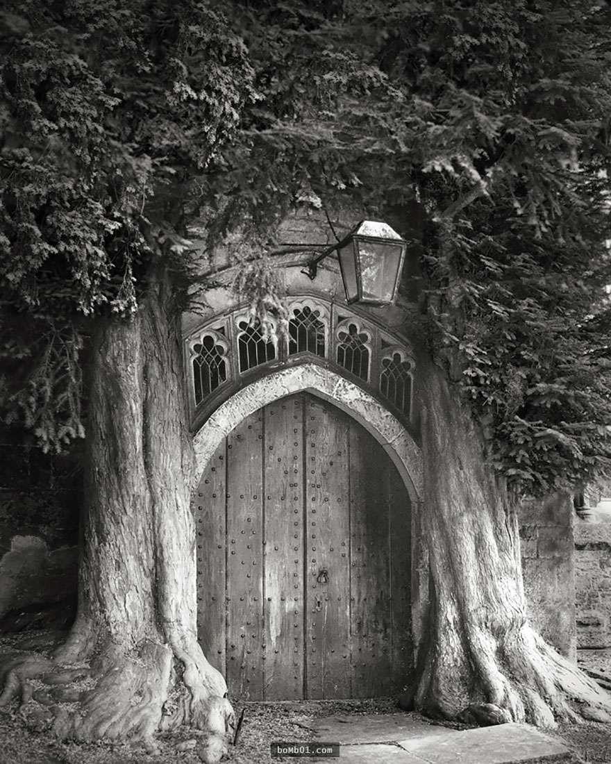 她花了14年時間,拍下了這一系列世界上最古老樹木的珍貴照片。 - boMb01