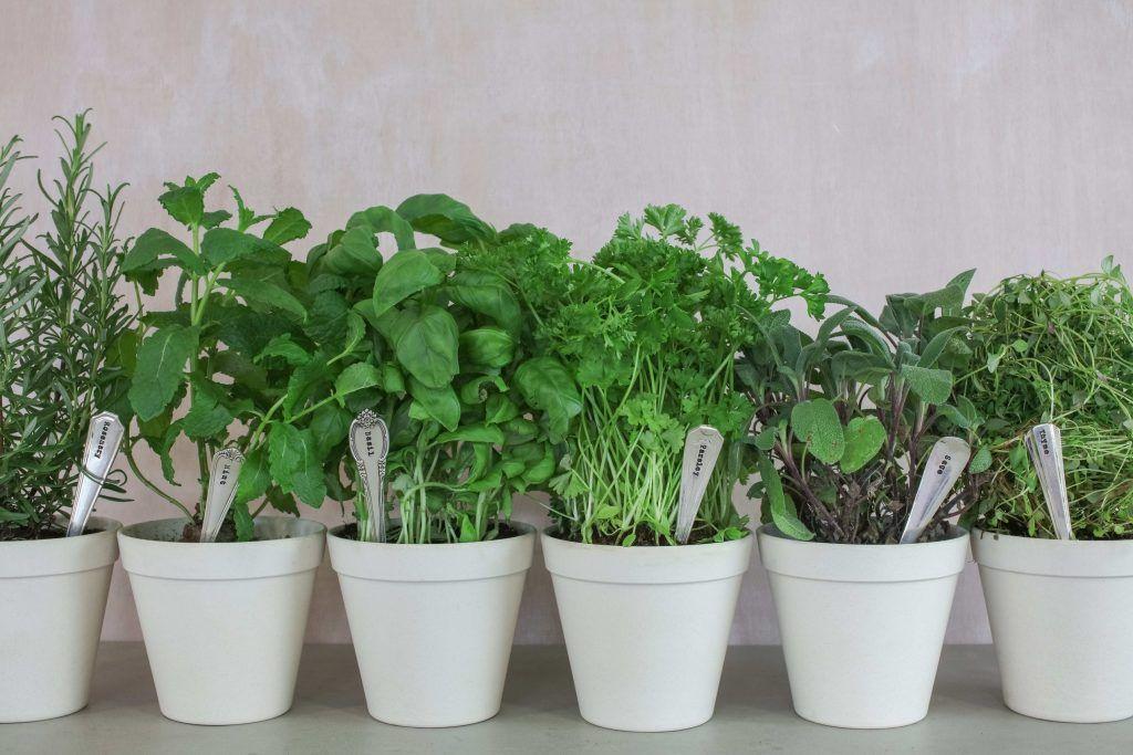 11 Warzyw I Owocow Ktore Mozna Uprawiac W Domu Learning From Hollywood Planters Planter Pots Pot