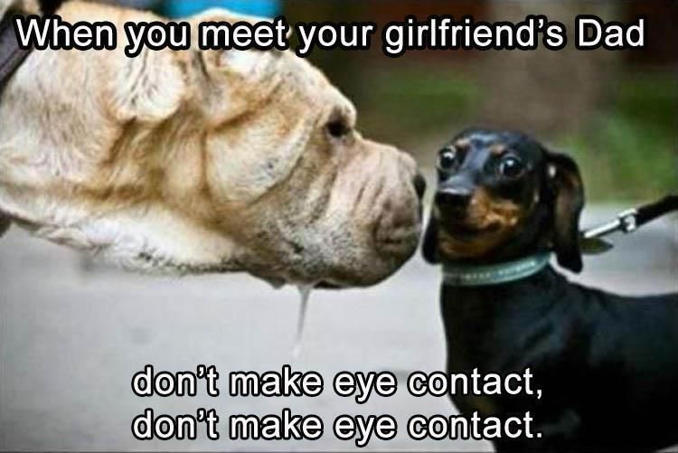 24 Dachshund Memes That Will Totally Make Your Day Sayingimages Com Funny Dachshund Dachshund Memes Funny Animals