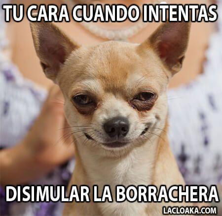 9f15eb10039aeb646bb33219c82b62a9 Jpg 450 436 Memes De Borrachos Chistosos Borrachos Chistosos Memes Divertidos