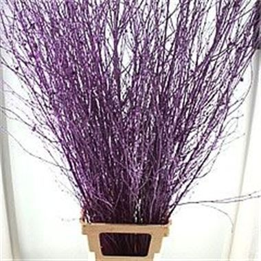 Birch dyed Purple - Create a spook-tacular Halloween master piece this 31st October to show all your friends and family!!