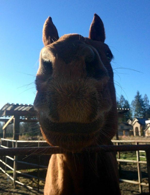 Spotlight on Trooper - J & M Acres Horse Rescue