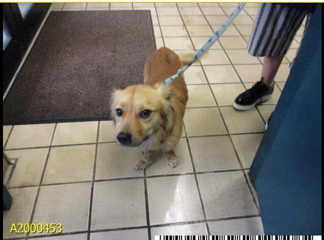 Rescue Needed 3 25 20 Fleetwood A2000453 1 Year 6 Months Male 22lbs Fleetwood Was Found As A Stray In 2020 Palm Beach County Animal Projects Rescue