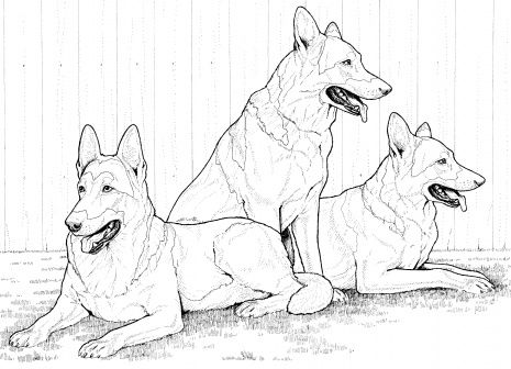 Dog Color Pages Printable German Shepherd Dogs Coloring Page