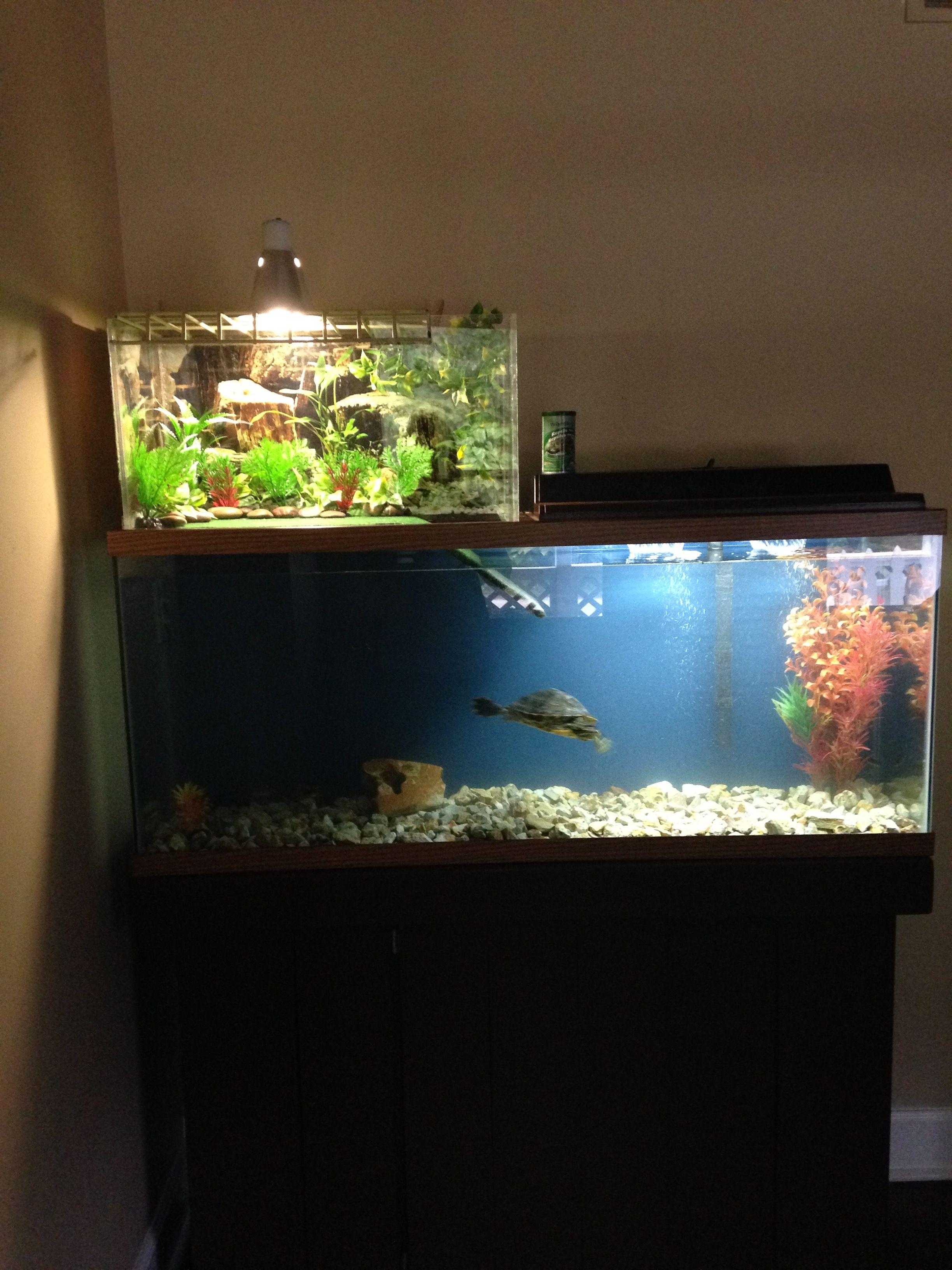 3309a692e75b9b09da009f0e0ae8beef Incroyable De Aquarium Deco Des Idées
