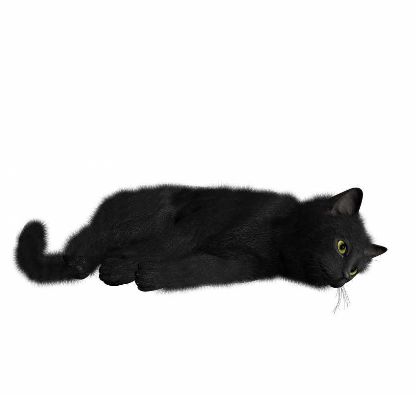 Black Cat Png Transparent Image Black Cat Pngget To Download Free Black Cat Png Vector Photo In Hd Quality Without Limit It Comes Image Cat Cats Cat Photo