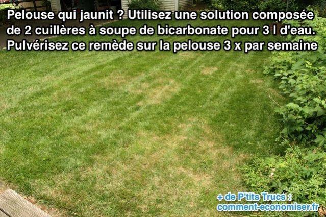 pelouse qui jaunit : le remède naturel qui marche. | bicarbonate