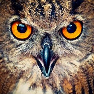 """Look """"whooooo"""" is watching you."""