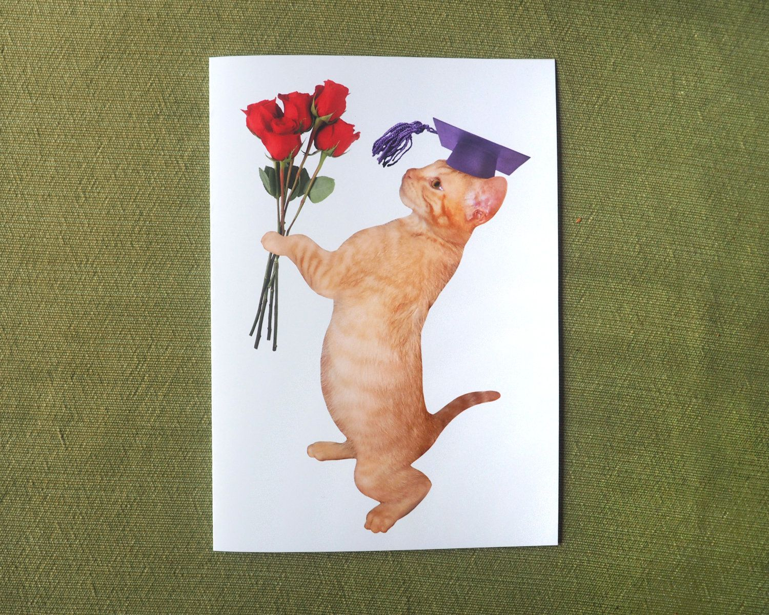 Orange Kitten With Roses Printable Cat Graduation Card Etsy Orange Kittens Graduation Cards Cat Cards