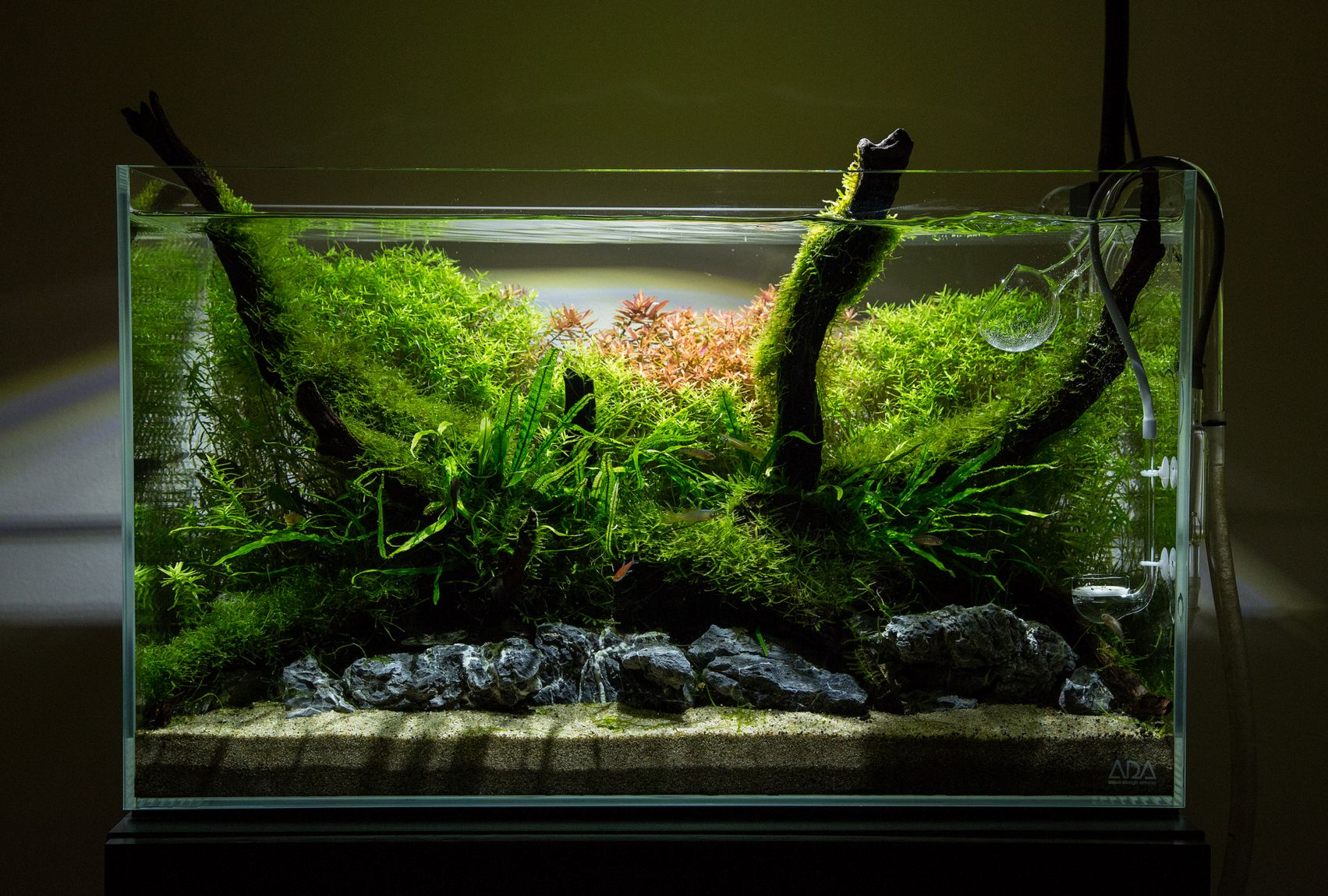 330d1413df64a22002169ff5eb95cf45 Incroyable De Aquarium Deco Des Idées