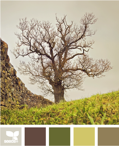 tree tones ~ This may be the new colors of our living room.