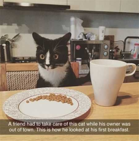 37 Funny Animal Pictures You're Going To Love #funnyanimalpictures