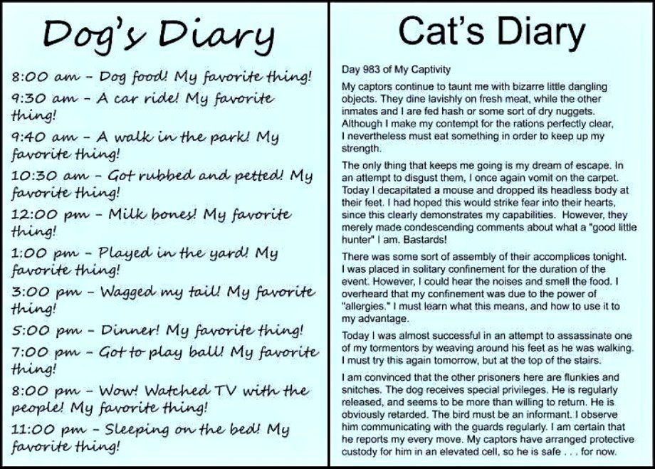 """This reminds me of our Riffy who would have written this in his kitty diary and titled it """"The Great Escape - Almost"""""""