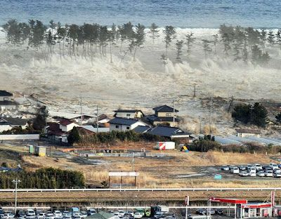 De Tsunamis y Bosques | Aula Silvicultura