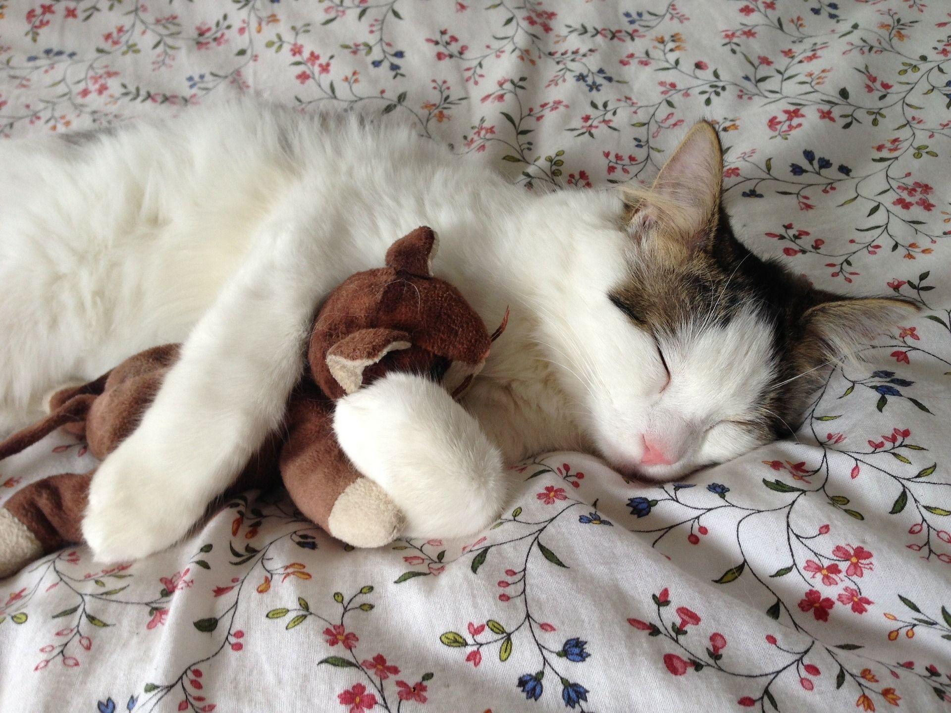 Glazba Za Mačke Koja Smiruje, Opušta I Pomaže Mačkama Da