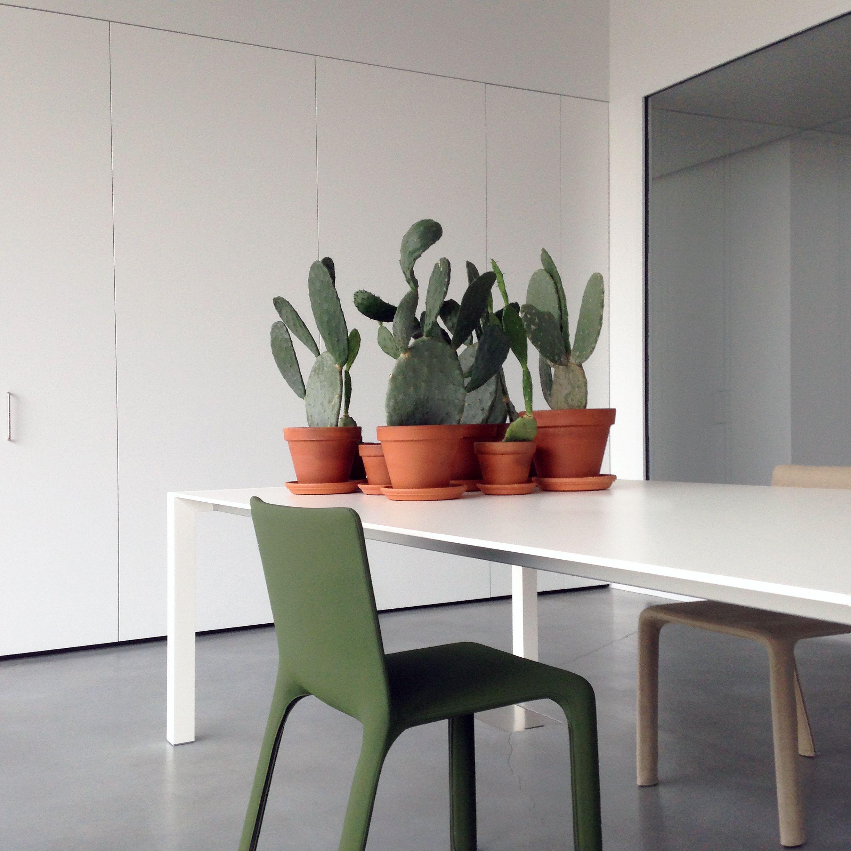 #plant #tree #interiordesign #minimal #minimalism #minimalissimo
