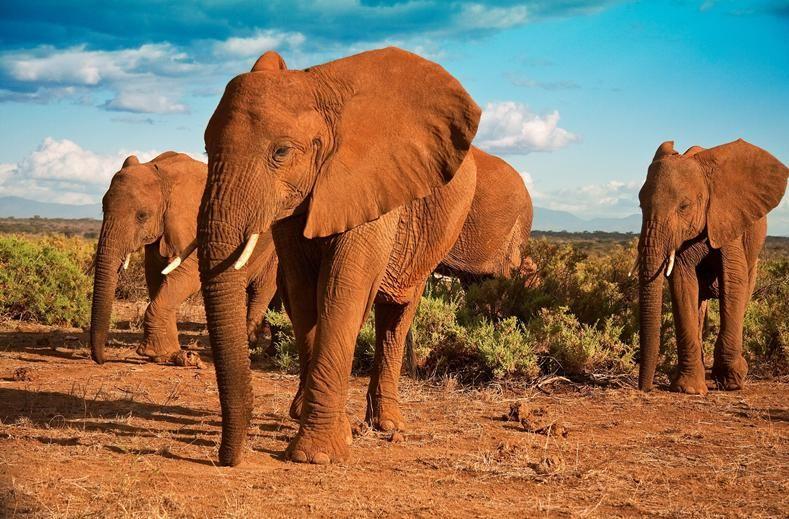 Tanzania biedt ongetwijfeld de meest indrukwekkende parken van Oost-Afrika. Naast de krater van Ngorongoro en de Serengeti, heeft ook Tarangire een zeer gevarieerd dierenrijk die je zeker niet wilt missen. Het landschap is divers en hier vind je nog een stukje oorspronkelijk Afrika zonder de toeristische drukte. Hoewel Tanzania geen goedkope reisbestemming is, krijgt je hier zeker waar voor je geld. De verlenging aan het prachtige zandstrand van tropisch Zanzibar maakt deze unieke ervaring…