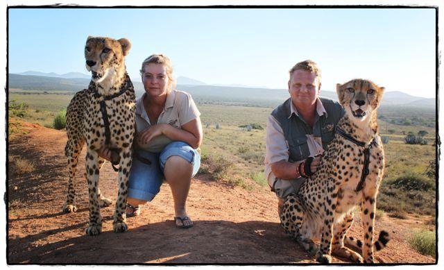 cheetah - Google Search