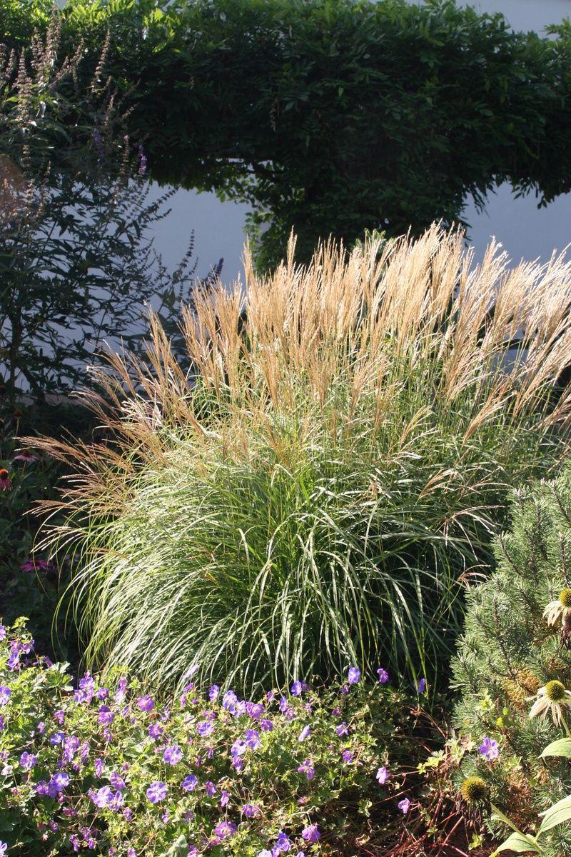Pflegeleichten Garten mit üppigen Beeten anlegen | Garten ...