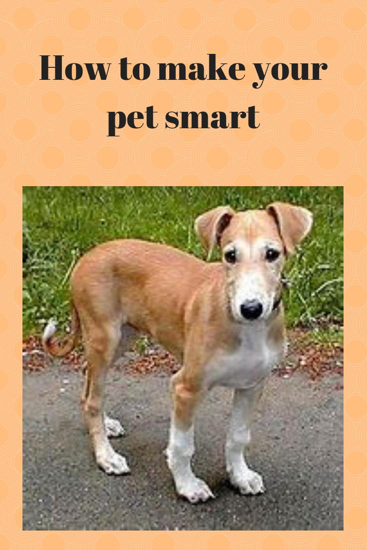 Petsmart Pet Care Associate Job Description Pet Care Pets Pet Training