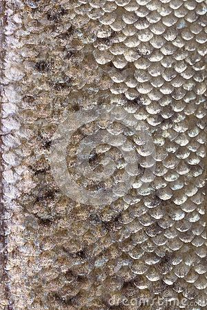Fish skin texture close up. by Eskymaks, via Dreamstime