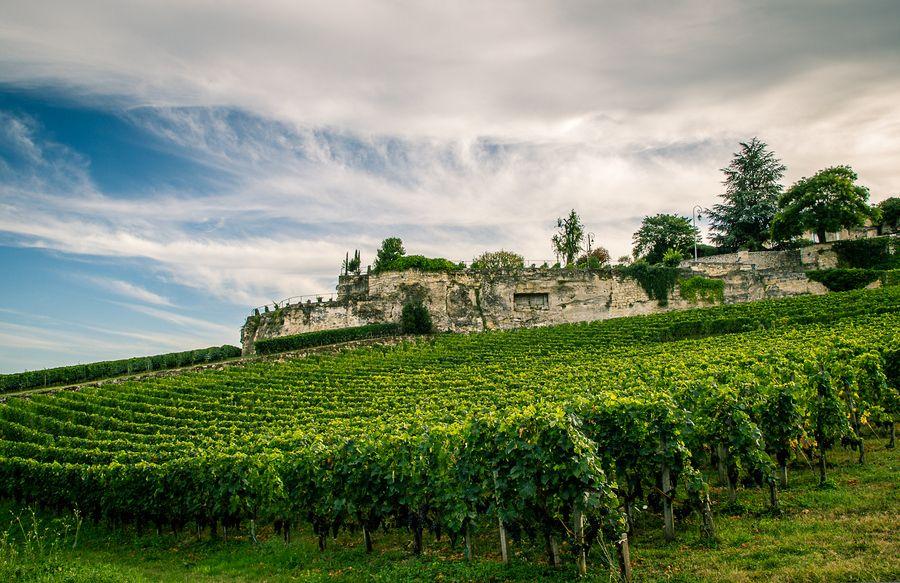Vineyards in St Emilion, France
