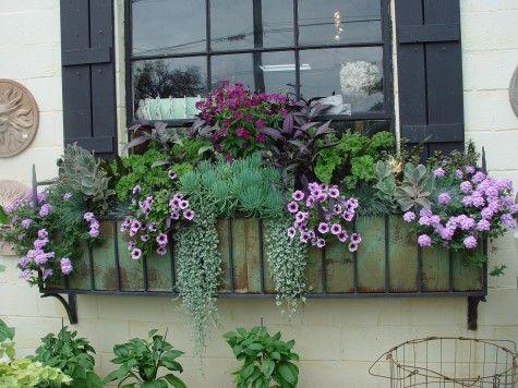 window box in purples