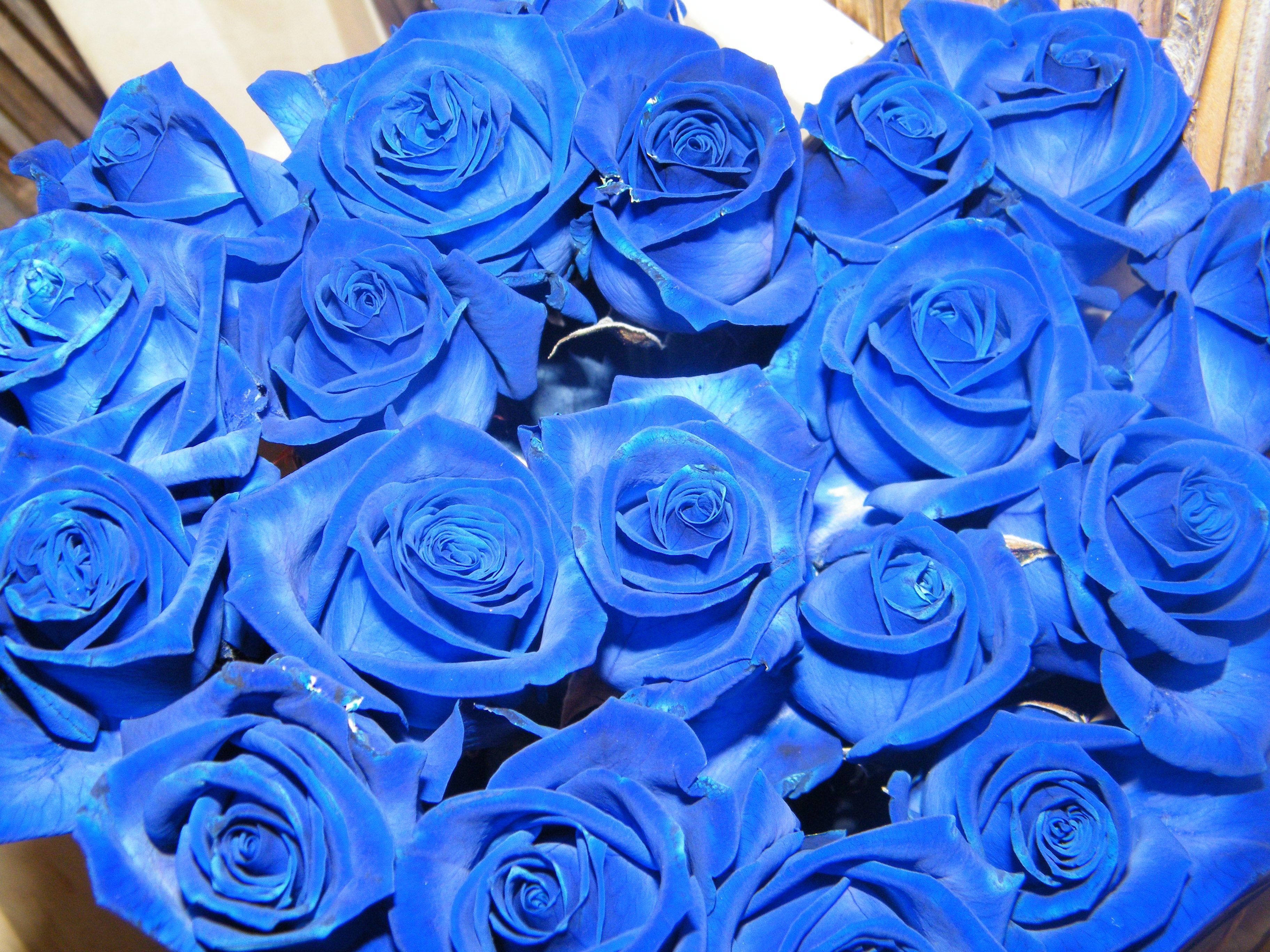 Rose bleu fleuriste designer 89 rue de famars for Fleuriste rose