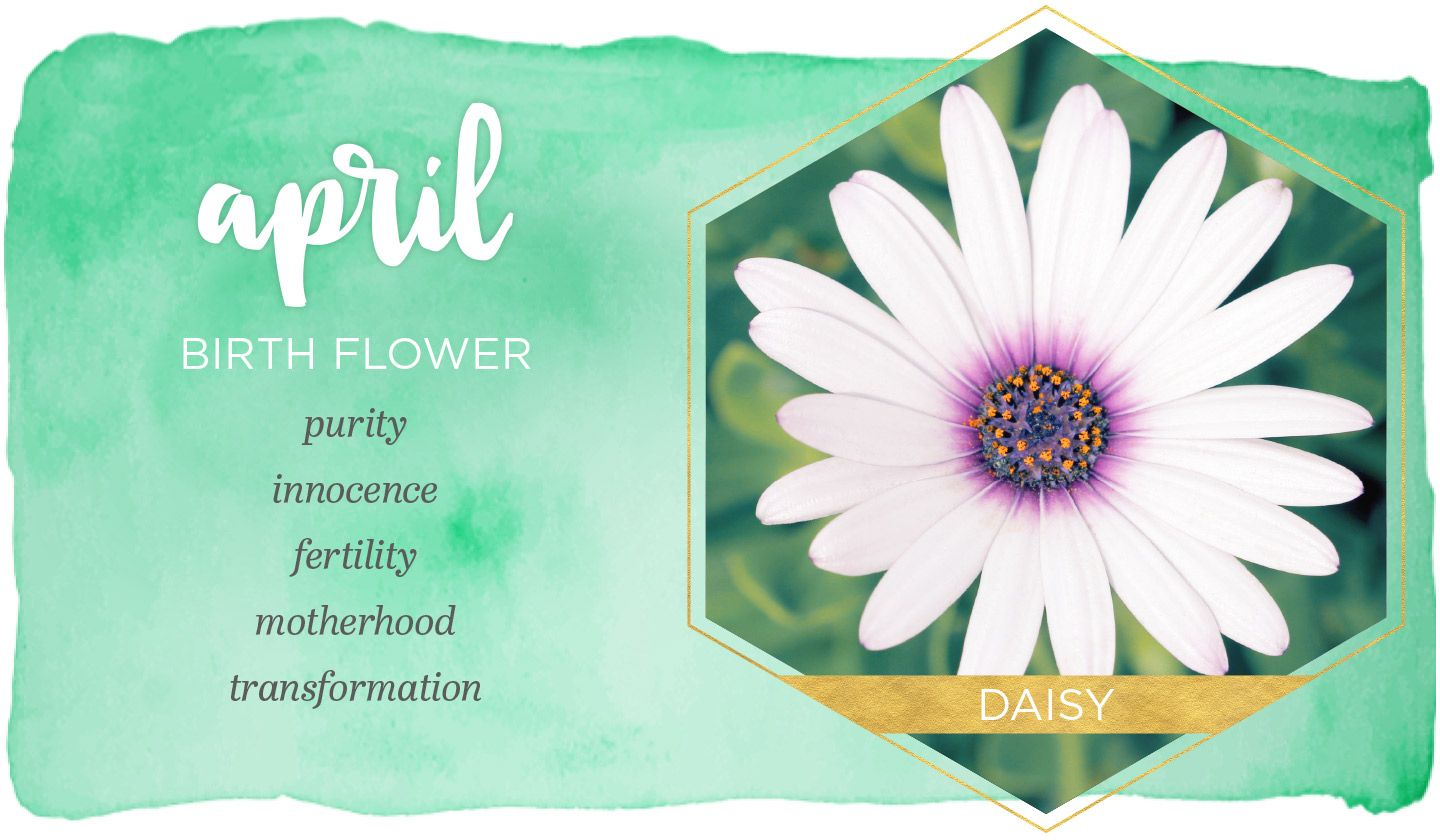 April Birth Flower Daisy Birth month flowers, April