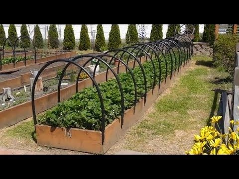 How To Construct A Raised Bed Row Cover Quickly And On The Cheap Garden Pinterest Raised