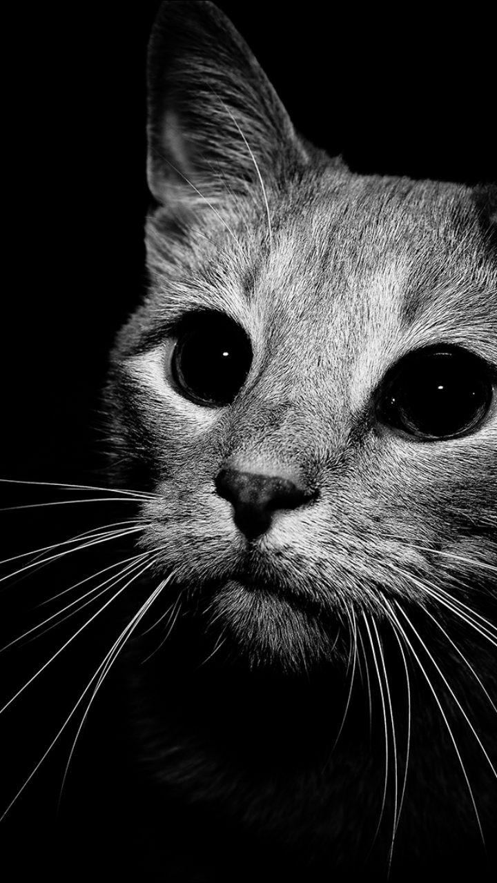 Uploaded By Celeste Chispan Find Images And Videos About Cat On We Heart It The App T Iphone Wallpaper Cat Cat Illustration Black And White Wallpaper Iphone