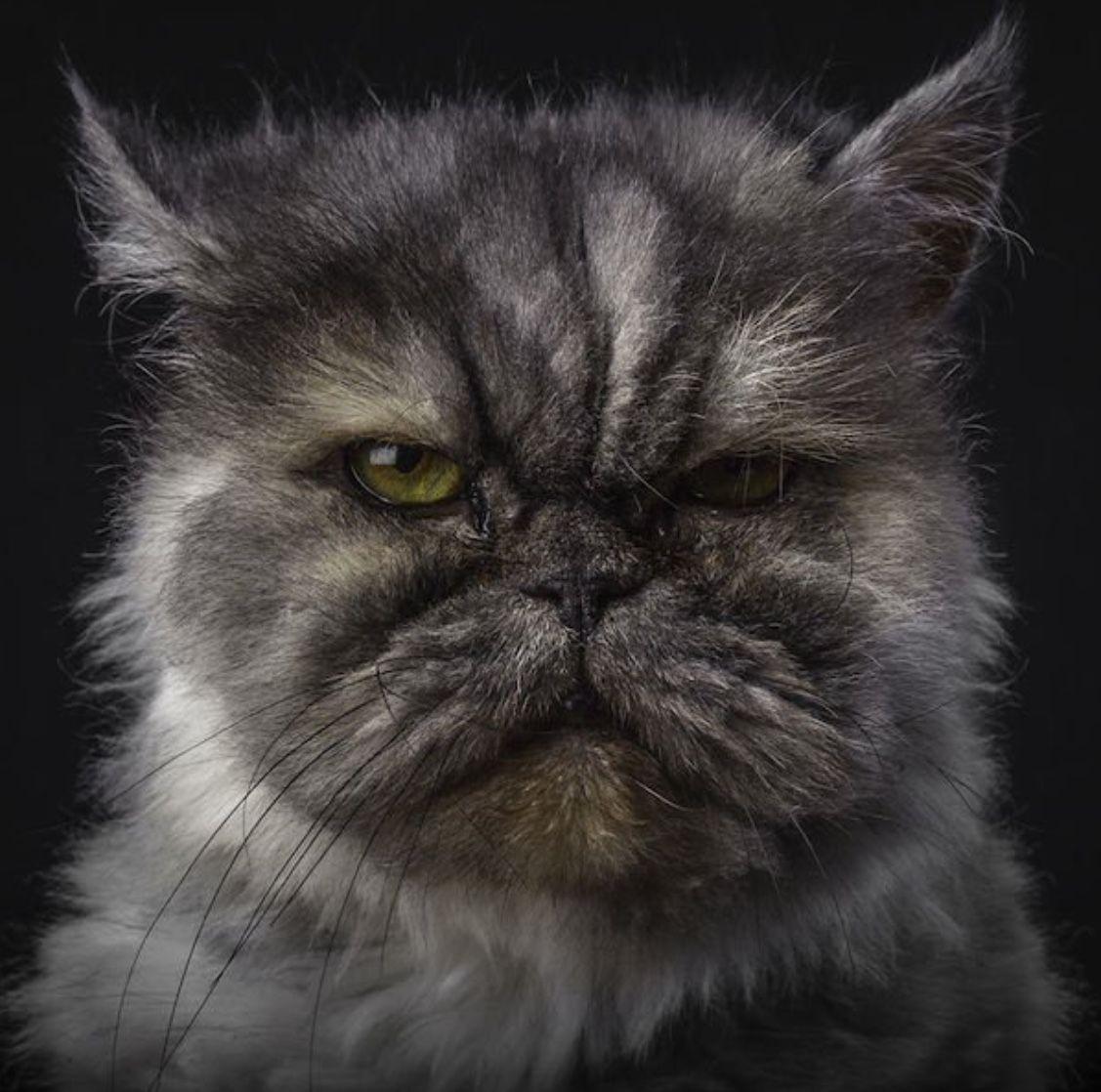 Pin by mermd weinstein on cat shenanigans pinterest cat