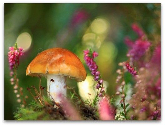 artsymphony_Whimsical+World+of+Mushrooms...+(7).jpg (528×403)