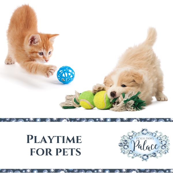 Playtime Is Essential For Pets They Are Able To Be Active And Exercise Through Play Plus You And Your Pet Enjoy Playing Tog In 2020 With Images Pet Toys Pets Your Pet